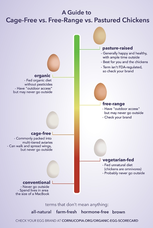 Egg choices